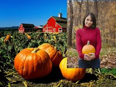 Small Business Ideas   List Of Small Business Ideas: How to Farm Pumpkins For Business   Pumpkin Farming Business