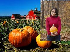 Small Business Ideas | List Of Small Business Ideas: How to Farm Pumpkins For Business | Pumpkin Farming Business
