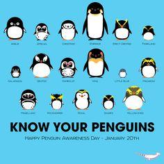 (77) penguins | Tumblr