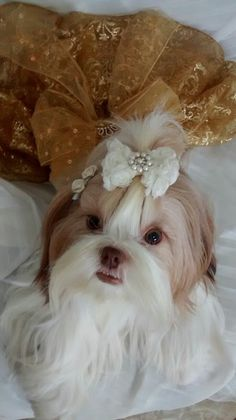 Lolla uma verdadeira diva com Vestido Crystal Carnaval de Veneza. Conheça o Ateliê Dogs in Love https://www.facebook.com/ateliedogsinlove/