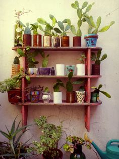 Shelves of potted plants.