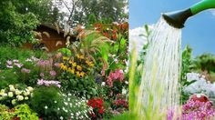 Save Water in Your Garden
