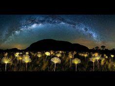 'Paepalanthus Galactic', fotografia de Márcio Cabral, do Brasil
