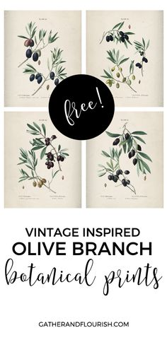 FREE Olive Branch Botanical Prints by Gather and Flourish Put calligraphy on fellum paper overlay on these prints Cuadros Diy, Vintage Inspiriert, Bulletins, Flyer, Do It Yourself Home, Free Prints, Diy Wall Art, Photomontage, Botanical Prints