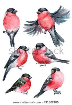 Find Bullfinches Set Birds Watercolor Illustration stock images in HD and millions of other royalty-free stock photos, illustrations and vectors in the Shutterstock collection. Bird Painting Acrylic, Watercolor Bird, Watercolor Paintings, Watercolor Portraits, Watercolor Landscape, Abstract Paintings, Illustration Blume, Watercolor Illustration, Bullfinch