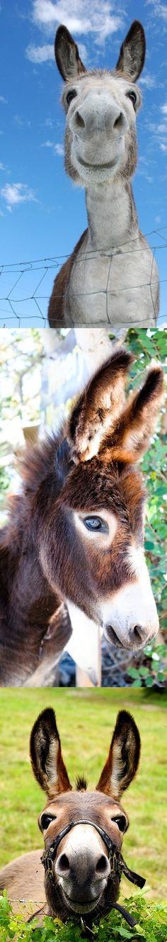 donkey donkey donkey