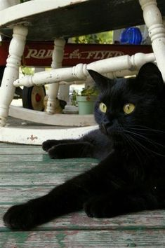 Beautiful black cat relaxing on the porch. Their tales are always getting under … - Hunde und Katzen I Love Cats, Crazy Cats, Cute Cats, Crazy Cat Lady, Funny Cats, Animals And Pets, Cute Animals, Groucho Marx, Photo Chat
