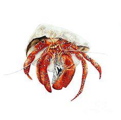 Hermit Crab by Marie Burke