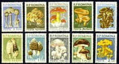 1958,MUSHROOMS,Pilze,Champignons,Fungi,Setas,Romania,Mi.1721,sc.1225,MNH,CV=$28