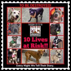 List Of Animals, Save Animals, Animals And Pets, Cat Care Tips, Dog Care, Dog Kennel Designs, Staten Island New York, Dog Playground, Pumpkin Dog Treats