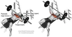 4*6 Barbell bench press. A compound exercise. Use it, along with the pull-up, to develop major upper-body strength! Target muscle: Sternal (Lower) Pectoralis Major. Synergists: Clavicular (Upper) Pectoralis Major, Anterior Deltoid, and Triceps Brachii. Visit site to learn proper form.