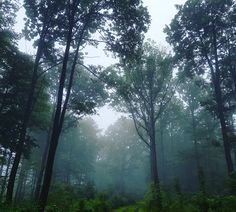 Gorillas im Nebel auch bei uns? ;) - http://www.schweinfurt360.de/#visitfranconia #14cities