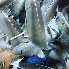 New feathers 😍🐦 found in Killarney in Ireland 😊 Feathers, Boho Fashion, Jewel, Ireland, Paper, How To Make, Handmade, Feather, Bohemian Fashion