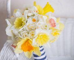 Narcissus bouquet - bridesmaid - for Gretchen