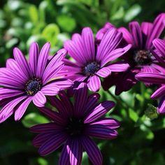 ¡Amo las flores! 🌸 #canon #700D Canon, Instagram Posts, Plants, Cannon, Plant, Planets