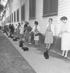 "Casting call for black cats to star in Roger Corman movie in Los Angeles, Calif., 1961  Published caption:HOLLYWOOD HUNTS A BLACK CAT-Out of this sidewalk full of black cats one may be chosen for the title role in (natch) ""The Black Cat,"" one of three segments in Tales of Terror, which AIP is casting at Producers Studio. Director Roger Corman hopes to find six look-alikes--one to star, the others to stand in--for the movie. from the Los Angeles Times"