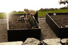 I love the way the cat is helping! ;-)  These raised beds are perfect for planting veggies and the extra height means no kneeling to weed or harvest... Köksväxtträdgård-Victoria Skoglund