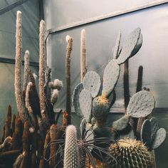 nuriablanco Cacti And Succulents, Planting Succulents, Cactus Plants, Planting Flowers, Tall Cactus, Botanical Interior, Succulent Landscaping, Plants Are Friends, Low Maintenance Garden