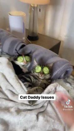Funny Cute Cats, Cute Funny Animals, Corgi Dog, Pet Dogs, Cat Gif, Crazy Cats, Cat Love, Animals And Pets, Fur Babies