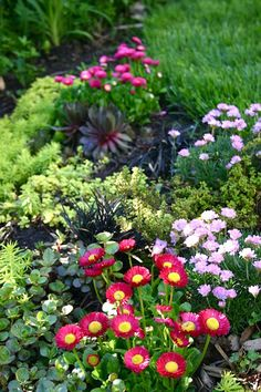 LeAnnLocher's Garden - The patch of low growers on the edge of our lawn by Lelonopo, via Flickr