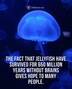 #stupid theory, you need intelligence to go through life. Than again jellyfish are smarter than all those idiotic people in life.
