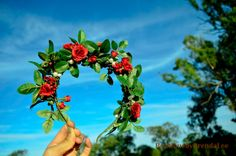 BRENDA LEE Mini roses rouges lunatique/bandeau tête Couronne Couronne/mariée/demoiselle d'honneur/fille/cercle/halo/floral/woodland guirlande accessoire de cheveux