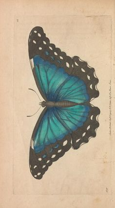 v.4 - The naturalist's miscellany, or Coloured figures of natural objects, George Shaw, printed for Nodder & Co. 1789-1813.