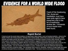 Because fish would decay if they went buried super fast by water and dirt quickly covering them up. That is also why we have fossils of plants. Noah Flood, Christian Apologetics, Bible Knowledge, Bible Truth, Christen, Trust God, Word Of God, Archaeology, Bible Verses