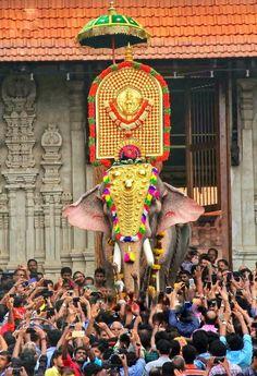Decorated elephant in kerala. Kerala India, South India, Kerala Travel, India Travel, Elephant Photography, India Street, Mother India, Elephants Photos, Lord Shiva Painting