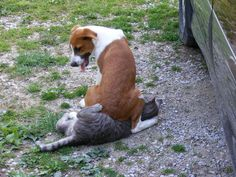 That poor cat!