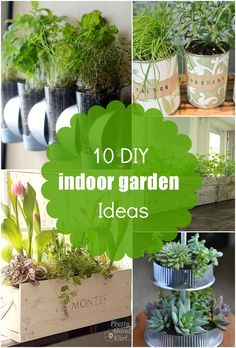 10 DIY Indoor Garden Ideas, herb planters, succulents and more!