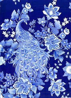 Plume - Royal Peacocks - Marine