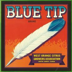 Blue Tip Citrus Crate Label Winter Garden, FL feather
