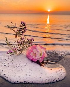 Beautiful Profile Pictures, Cool Pictures Of Nature, Colorful Pictures, Beautiful Images, Floral Wallpaper Iphone, Rose Gold Wallpaper, Cute Pastel Wallpaper, Wallpaper Nature Flowers, Flowers Nature