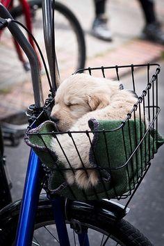 Balade en vélo....