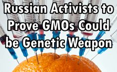Russian Activists to Conduct Independent Studies Proving GMOs Could be Genetic Weapon