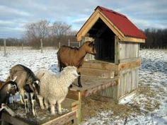 goat fort, this is really cute