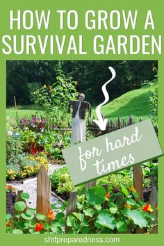 Learn how to grow a survival garden for hard times: a look at everything you need to think about and do to succeed at feeding your family in case of unexpected emergencies. Survival Life Hacks, Survival Prepping, Survival Food, Emergency Preparedness, Wilderness Survival, Survival Skills, Organic Gardening, Gardening Tips, Container Gardening