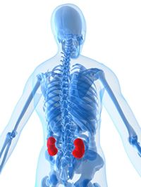 ACIBADEM ADVANTAGES IN KIDNEY TRANSPLANTATION