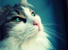 A Cat in Blue