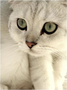 WOW STUNNINGLY BEAUTIFUL!!!! looks like a Snow Leopard or something 'WILD'! ^_^ :3
