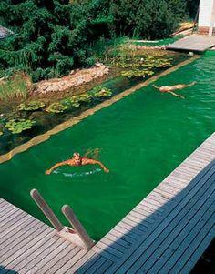 natural_pool