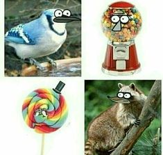 Regular show in real life, lol Cartoon Cartoon, Funny Cartoon Characters, Cartoon Shows, Cartoon Crossovers, Funny Cartoons, Funny Memes, Hilarious, Regular Show Memes, Regular Show Anime