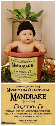 DIY Harry Potter Mandrake Baby Costume from Costume Works.The cutest baby costume ever. For an awesome archive of DIY Halloween Costumes go here. You can find the high resolution version of the mandrake Label created by Crafty Lil' Thing. Baby Harry Potter, Fantasia Harry Potter, Harry Potter Mandrake, Harry Potter Magic, Harry Potter Baby Costume, Halloween Bebes, Hallowen Costume, Costume Ideas, Harry Potter Halloween Costumes