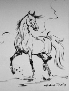 Horse sketch moving anatomy Horse Pencil Drawing, Horse Drawings, Horse Stencil, Stencil Painting, Horse Sketch, Line Sketch, Horse Logo, Ink Pen Drawings, Animal Silhouette