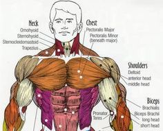 Bodybuilding.com - Killer Chest Training - Tips And Routines!