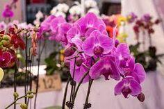 Resultado de imagen para orquidea en argentina