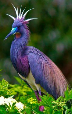 Tricolored Heron at the St. Augustine Alligator Farm in St. Augustine, Florida • photo: Jackie Kramer on National Geographic