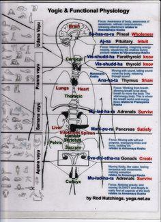 yogic funcional fisiologia
