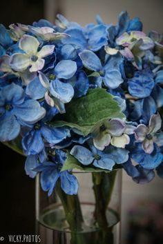 """""""Ter na vida algum motivo pra sonhar, ter um sonho azul, azul da cor do mar."""" Tim Maia Uma ótima semana !!!  #flower @vicky_photos_infantis https://www.facebook.com/vickyphotosinfantis http://websta.me/n/vicky_photos_infantis https://www.pinterest.com/vickydfay https://www.flickr.com/vickyphotosinfantis"""